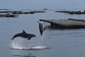 Sicentific articles dolphins and whales