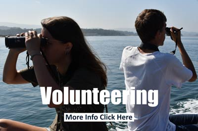 Volunteering with dolphins
