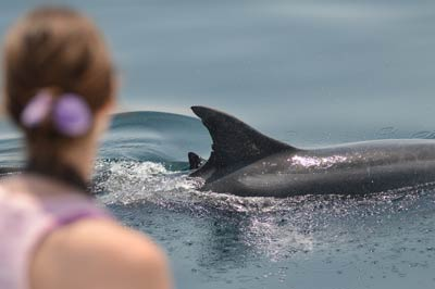 Volunteer with dolphins