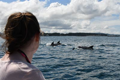 Studying bottlenose dolphins in the wild