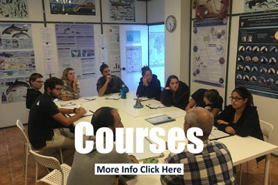 Marine mammal research courses