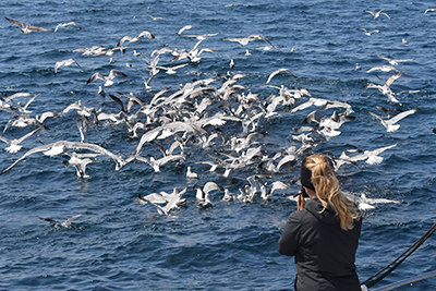 Marine bird research and conservation