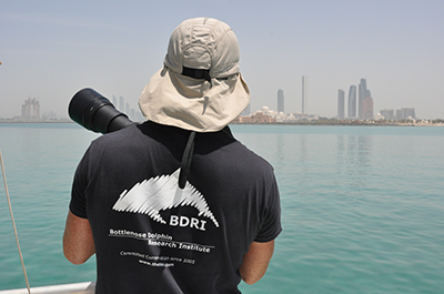 Marine mammal research in Arabian Gulf